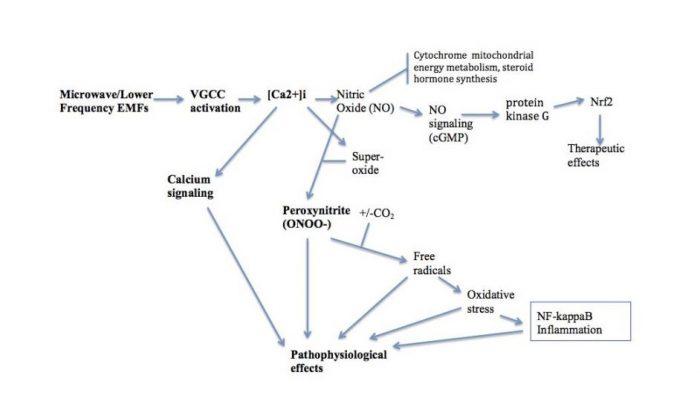 grafico-molecular-5g-covid-19