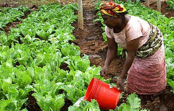 agrucultura-africa