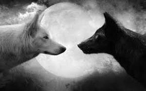 lobo-blanco-y-negro